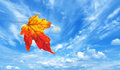 Autumn Maple Leaf Royalty Free Stock Photography - 57554697