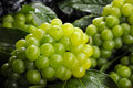 Green Grapes Stock Photos - 57556923