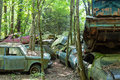 Old Wrecked Cars In Woods Stock Image - 57655291
