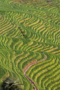 Seven Stars Accompany The Moon, Part Of The Dragons Backbone Rice Terraces Stock Image - 57725041