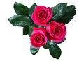 Red Rose, Isolate Stock Image - 57725341