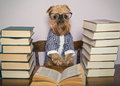 Serious Dog  Reads Books Royalty Free Stock Image - 57738066