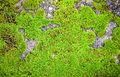 Green Moss On Rock Stock Image - 57757161