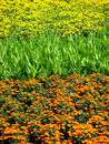 Colors In A Field Royalty Free Stock Photos - 5788198