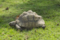 Old Turtle Stock Image - 57832621