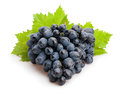 Black Grapes Royalty Free Stock Photography - 57951697