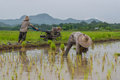 Farmers Working Planting Rice In The Paddy Field Royalty Free Stock Photography - 57985117