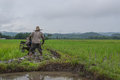 Farmer Working Planting Rice In The Paddy Field Stock Image - 57986881