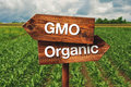 Gmo Or Organic Farming Direction Sign Stock Photo - 58016780