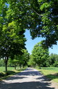 Tree-lined Street With Leaves Shaping A Heart Over The Road Stock Photo - 58062260