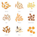 Icon Set Of Cereal Grains Part 3 Royalty Free Stock Image - 58089836