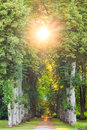 Straight Forest Pathway With Beautiful Sunrays Stock Photos - 58100503