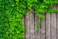 A Fence Made Of Wood With Wild Grapes Curly Ivy Stock Images - 58138604