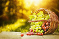 Green And Red Grapes Royalty Free Stock Photo - 58166255