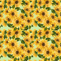 The Pattern Of Blooming Yellow Flowers Sunflower Painted In Watercolor Stock Photos - 58201293