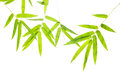 Bamboo Leaf Royalty Free Stock Photo - 58202005