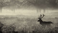 Silhouette Of A Red Deer Stag Stock Images - 58224084