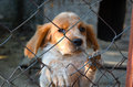 Puppy  Behind A  Fence. Stock Image - 58229261