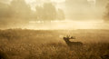 Silhouette Of A Red Deer Stag Stock Photos - 58270553