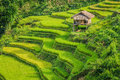Rice Terraces Royalty Free Stock Image - 58270566