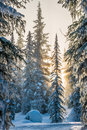 Winter Tree Royalty Free Stock Image - 58273706