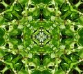 Green Leaves Tile Pattern Background Royalty Free Stock Photography - 5831147