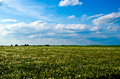 Field Of Dandelions Stock Images - 58329034