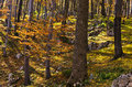 Inside Forests Of Djerdap National Park On A Fall Sunny Day Stock Photo - 58341990
