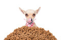 Hungry Dog Royalty Free Stock Photography - 58342057