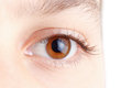Eye With Beautiful Long Lashes, Brown, Macro. Royalty Free Stock Photography - 58357777