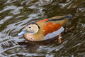 Ringed Teal Royalty Free Stock Image - 58361826