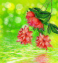 Floral Background. Stock Images - 58400544