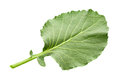 Cabbage Leaf Isolated Stock Image - 58407821