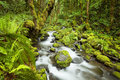 Creek In Lush Rainforest, Columbia River Gorge, USA Stock Photography - 58410542