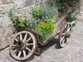 Vintage Garden Barrow With Wild Flowers And Herbs . Fie Allo Sciliar, South Tyrol, Italy Royalty Free Stock Image - 58480546