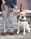 Blind Person With Her Guide Dog Stock Images - 58481214