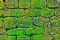 Texture Of Rock Wall Overgrown With Moss Stock Image - 58487461