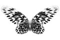 Black And White Image Of Beautiful Butterfly With Colorful Wings Stock Images - 58490254