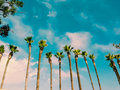 Warm Palm Trees Stock Images - 58502724
