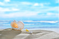 Seashells On The Beach Royalty Free Stock Photos - 58522808