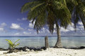 Rangiroa Atoll And Lagoon Near Tiputa Pass - French Polynesia Royalty Free Stock Photo - 58613245