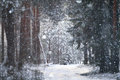 Frosty Winter Royalty Free Stock Images - 58664419