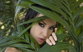 Sexy Beautiful Woman Hiding Behind The Palm Leaves. Beautiful St Royalty Free Stock Photos - 58697948