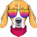 Vector Hipster Serious Dog Beagle In Glasses Stock Photos - 58720773