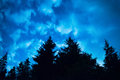 Black Forest With Trees Over Blue Night Sky Stock Images - 58750504