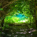 Magical Forest With Path To The Light Royalty Free Stock Images - 58750739