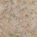Dry Grass Ground, Seamless Background Texture Stock Photos - 58856283