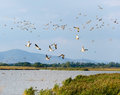 Autumn Landscape - Flying Flock Of Mallard Ducks In The Sky Stock Image - 58863641