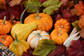 Fall Still Life Display Royalty Free Stock Photo - 58871515