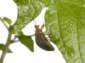 Bug On A Plant Stock Images - 5898354